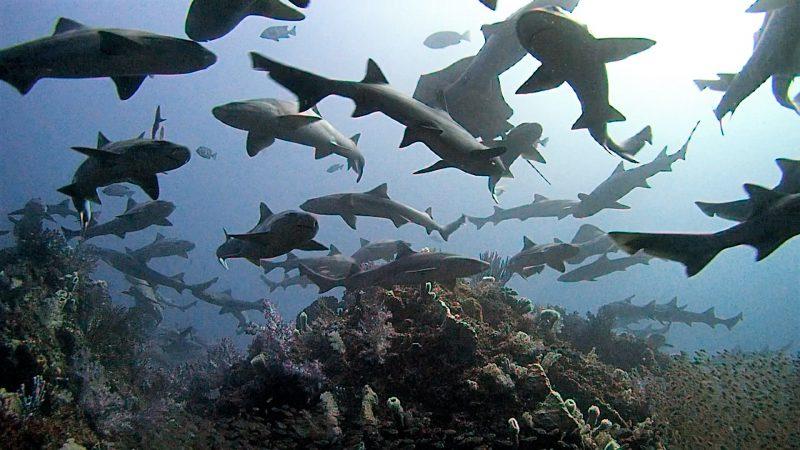 サメ シャークスクランブル 千葉 館山 伊戸ダイビングサービスBOMMIE